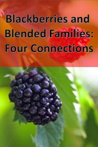 Four connections between making blackberry jelly and making a blended family