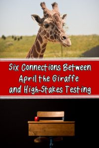 April the Giraffe and high-stakes testing have some ideas in common.