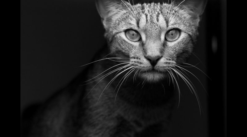What can Trump and Clinton learn from a cat? Read on to find out.